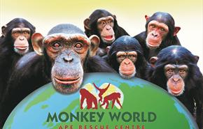 Monkey World, Dorset - Make the connection