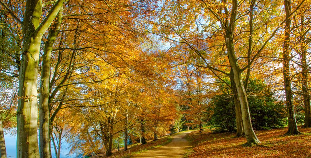 The Anenome Walk in Autumn at Sherborne Castle and Gardens, Dorset