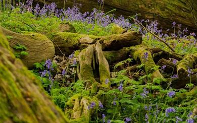 Thornecombe Wood Local Nature Reserve near Dorchester, Dorset. Copyright Ian Metcalfe