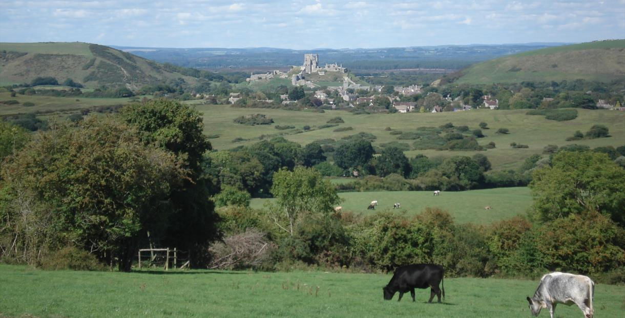 Views to Corfe Castle from Commoners' Ways walking trail in Dorset