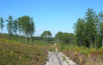 Wareham Forest in Dorset