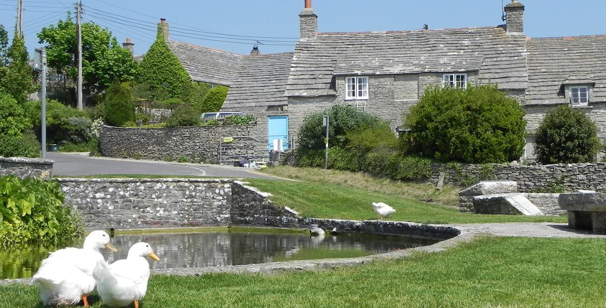 Worth Matravers duck pond