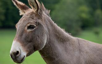 Donkey Day at Exbury Gardens