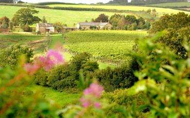 Furleigh Wine Estate