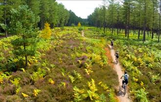 Enjoy a cycle ride at Moors Valley