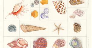 Shells in box by Trisha Hayman