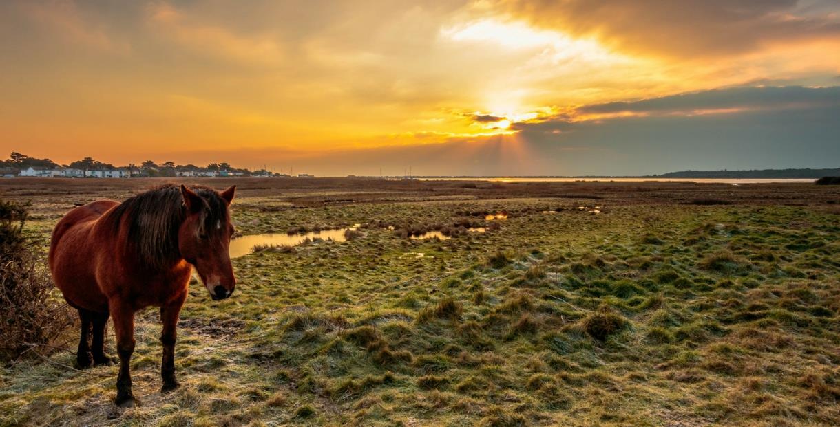 Stanpit Marsh, Mudeford, Dorset