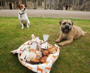 Dog friendly events in Durham
