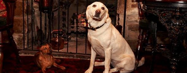 Dog friendly restaurants, pub, and cafes in Durham