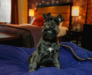 Dog friendly accommodation in Durham
