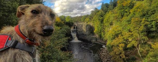 Dog Friendly Durham