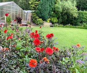 colourful flowers and greenhouse in background at Durham University's Botanic Garden