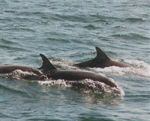 Durham's nature calendar coast dolphins