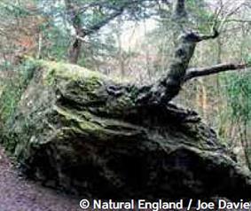 Devil's Stone Castle Eden