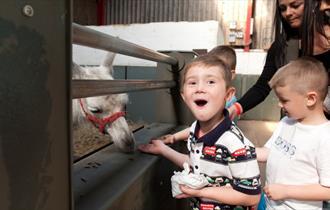 Feed the llamas at Adventure Valley