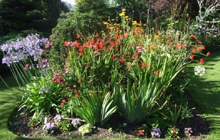 Gardens at Hillside Cottages: Beautifully maintained assortment of colourful plants and shrubs.