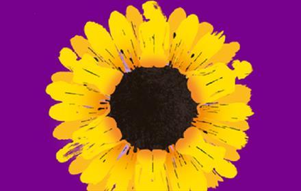 yellow sunflower, purple background