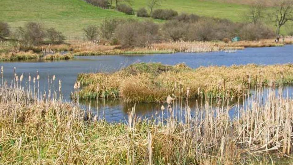 Cassop Vale Nature Reserve