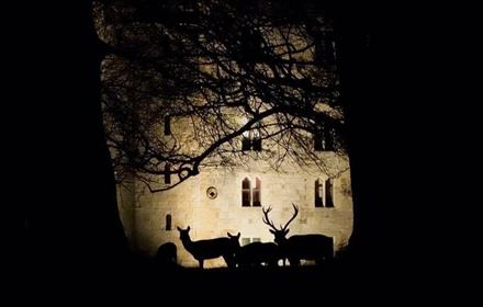 Night time view of reindeers in front of a brightly lit castle wall.  Raby Castle grounds.