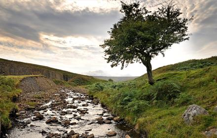 A tree and beck in Weardale