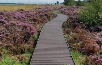 Path surrounded by heather in Hedleyhope Fell