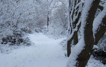 Winter scene, pathway and trees covered with snow.