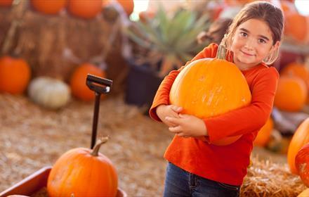 Pumpkin Festival at Adventure Valley. Image of little girl holding a pumpkin.