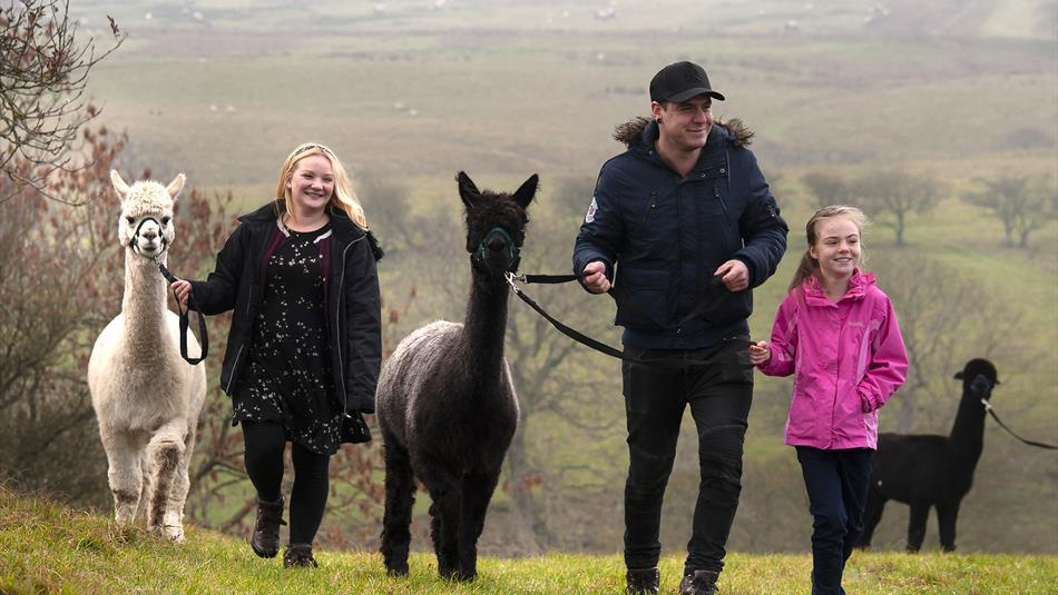 Take a walk with alpacas at Teesdale Alpacas in the Durham Dales