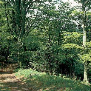 Forest at Castle Eden Dene National Nature Reserve