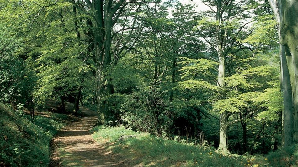 Castle Eden Dene National Nature Reserve