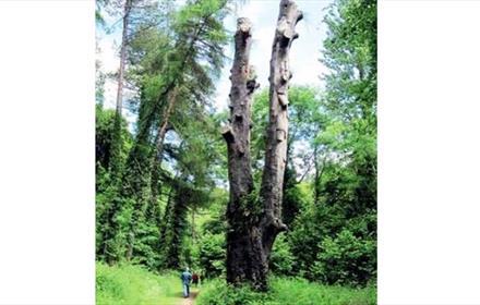 Castle Eden Dene - The Yew Tree Walk