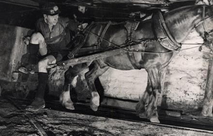Photograph of a miner with a pit pony harnessed to a tub in the underground workings of an unidentified colliery, early 20th century