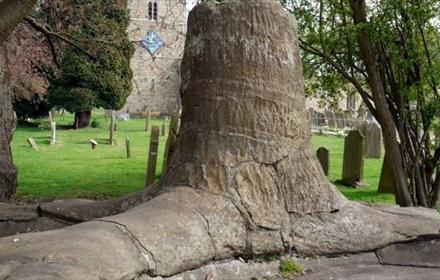 Stanhope Fossil Tree