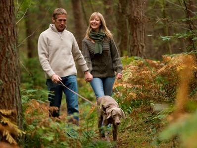 Walking at Hamsterley Forest