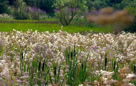 Flowers, Bullrushes, Grass, Trees
