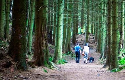 Killhope Woodland Walks - Killhope Closed Temporarily