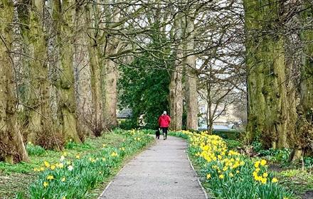Nature Trail at the Bowes Museum. Grounds brimming with daffodils.