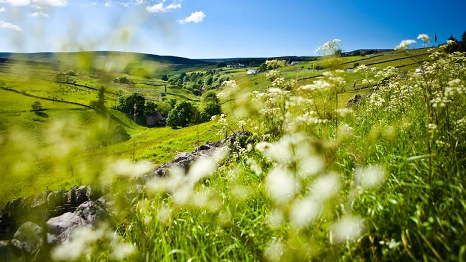Spring in the North Pennines