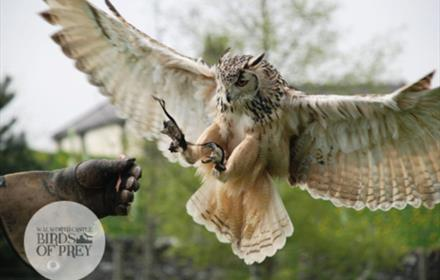 Walworth Birds of Prey Experiences