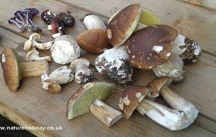 Wild Mushroom selection on display