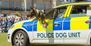 999 dog Photo by Graham Huntley