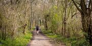 Bluebells Abbots Wood