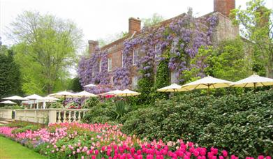 Pashley Manor Gardens back terrace by Kate Wilson