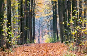 Path through the forest covered with leaves and surrounded on both sides by tall trees