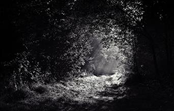 black and white forest path with light shining through the leaves