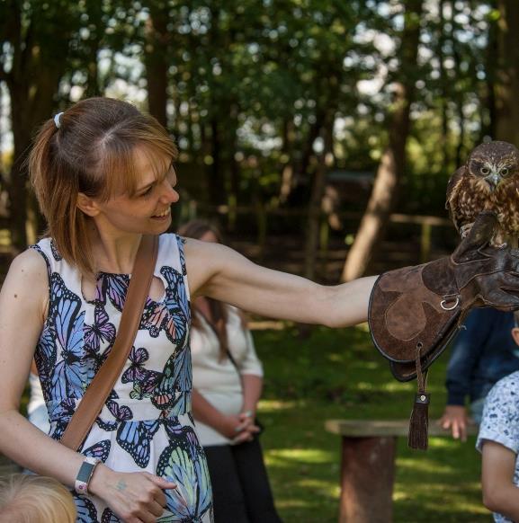 Owl landing on lady's arm at Bridlington Animal Park in East Yorkshire.