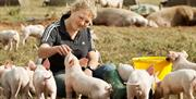 A group of piglets getting hand fed at Anna's Happy Trotters, in East Yorkshire
