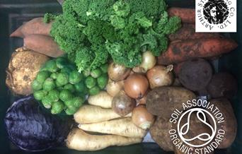 A vegetable box from Arthur Street Trading Co, complete with broccoli, sprouts, turnip, potatoes ect, in East Yorkshire