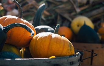 PYO pumpkins at William's Den