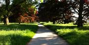 An image of the pathway through the trees in the grounds by Nordham Cottages, North Cave, East Yorkshire